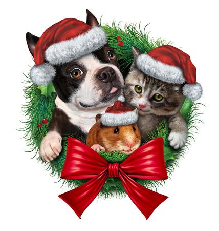Bildresultat för bilder på jul med katter