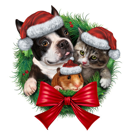 three animals: Pets holiday wreath with a dog cat and hamster wearing Christmas hats as a symbol of veterinary medicine and pet store or animal adoption issues during the winter season celebration on a white background  Stock Photo