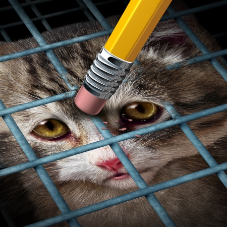 adopting: Animal adoption concept and rights as a kitten behind a cage being erased by a yellow pencil eraser as a hope metaphor for adopting pets from a shelter giving freedom to caged orphaned cats and dogs