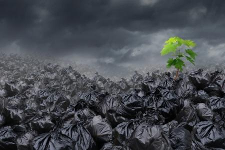 Hoffnung Umweltkonzept mit einem Haufen schmutziger Müll auf einer Deponie mit einer sich abzeichnenden neuen grünen Baum wächst aus der Umweltverschmutzung als Metapher für die anhaltende Kraft der Natur und die globale Gesundheit