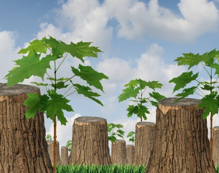 Renewable resources as a concept for sustainable forest management with a group of cut down old trees and new green saplings growing between the wooden stumps as a symbol of hope for the future of the environment and conservation