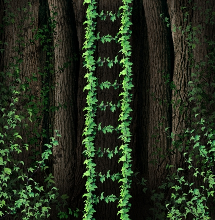 coming together: Growth Ladder and a symbol of a new growing steps to success business concept as a group of green vines in a thick forest coming together to form a upward path as an opportunity for freedom and conquering challenges