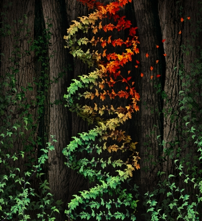 dna double helix: DNA damage symbol as a dark tree forest growing a green vine in the shape of a genetic double helix icon that is aging to autumn colors losing leaves as a metaphor for age related illness and cancer disease  Stock Photo