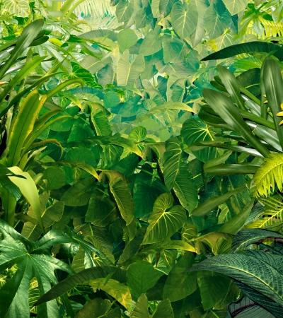 feuilles arbres: Tropical fond de jungle avec plantes vertes riches faune aussi riche que foug�res et de feuilles de palmier trouv�s dans la for�t tropicale des environnements chauds dans les climats chauds du sud comme l'Am�rique du Sud et en Asie Hawaii