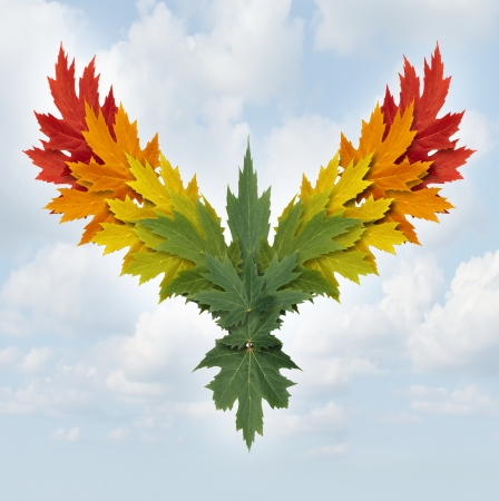 Wings of nature symbol as tree leaves with different colors shaped as a flying majestic bird as a metaphor for success growth and freedom in business and environment conservation issues  photo