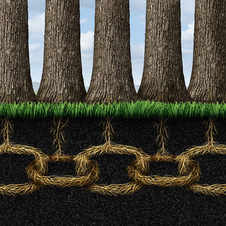 tree linked: Unbreakable solidarity and teamwork cooperation concept as a group of trees connected underground  Stock Photo