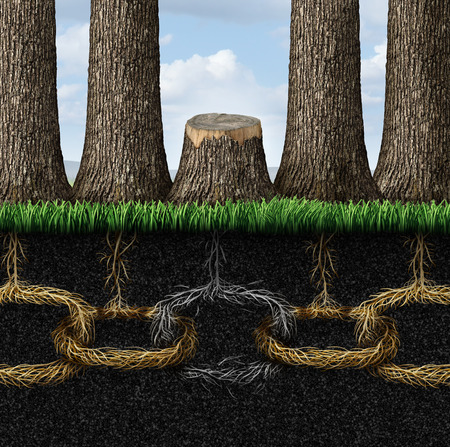tree linked: Broken chain business concept with a group of trees and roots shaped as connected links with one link that has been severed and separated by the cutting of a tree as a metaphor for teamwork failure and partnership crisis
