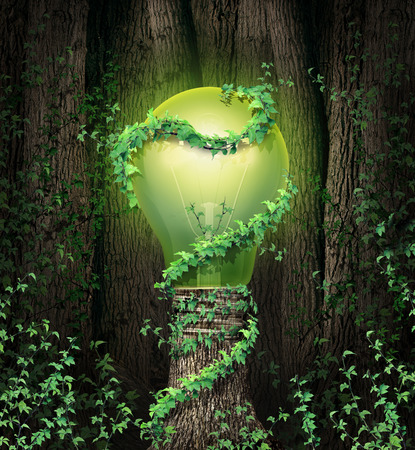 Environment conservation concept with a tree forest and a trunk shaped as an illuminated green lightbulb as a climate metaphor and symbol for renewable energy and global environmental protection and  inspiration Reklamní fotografie - 25725262