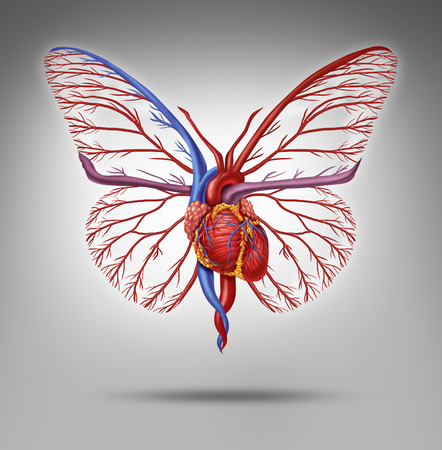 heart organ shaped as a butterfly with wings flying up