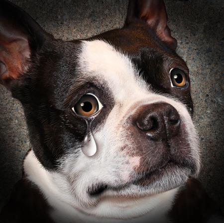 zooth�rapie: Perdu cruaut� et de n�gligence animale notion animal de compagnie avec un chien triste � pleurer en regardant le spectateur avec une larme de d�sespoir comme un concept de la n�cessit� de traiter humainement des �tres vivants Banque d'images