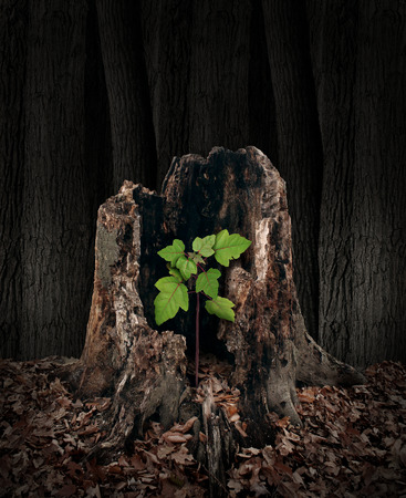 New development and renewal concept as a hollow old rotting tree stump with a growing green sapling emerging and replacing the past as metaphor for revival in business and in life and a symbol of hope with a vibrant  future