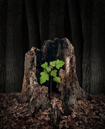 Novo conceito de desenvolvimento e renovação como um toco de árvore velho e podre, com um rebento verde crescente emergindo e substituindo o passado como metáfora do renascimento nos negócios e na vida e um símbolo de esperança com um futuro vibrante