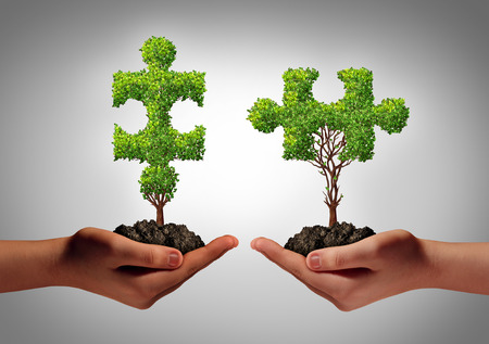 coming together: Team collaborate business concept with two human hands holding trees shaped as a jigsaw puzzle coming together as a success metaphor for growing cooperation and to build a  teamwork agreement  Stock Photo