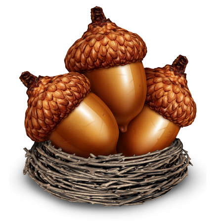 Investment savings financial concept to squirrel away some money as a group of acorns in a nest of twigs representing business surplus income or personal retirement wealth being saved for the future on a white background
