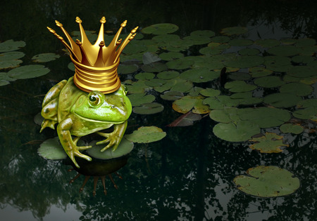 Frog prince concept with gold crown representing the fairy tale concept of change and transformation from an amphibian to royalty on a lily pad pond background
