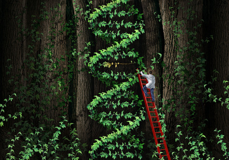 dna helix: Gene therapy DNA helix concept with a medical genetics specialist doctor on a ladder climbing a plant that represents part of the human chromosomes anatomy as a biotechnology metaphor for genetic testing and repair  Stock Photo