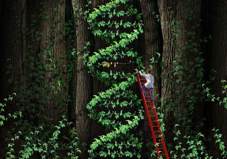 La terapia génica concepto hélice del ADN con un médico especialista en genética médica en una escalera subiendo una planta que representa una parte de la anatomía de los cromosomas humanos como una metáfora de la biotecnología para las pruebas genéticas y la reparación Foto de archivo