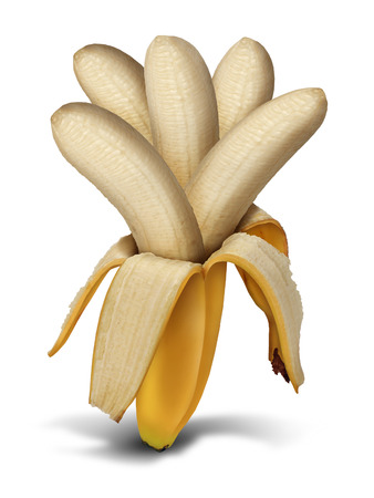 dividends: Increasing production concept and increasing crop yield as a farming and agriculture food development symbol as a peeled open banana with a group of multiple fruit flesh growing out as a metaphor for profits return and compound interest earnings  Stock Photo