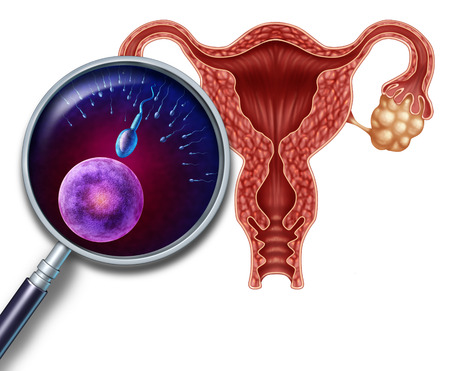 Human reproduction systenm concept as a cross section of a uterus with a magnifying glass close up view of the egg and sperm cells in the process of conception and fertilization as a medical symbol of female and male fertility  photo