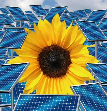 Solar energy concept as a group of three dimensional sunlight gathering panels with a sunflower plant as an alternative fuel symbol for environmentaly responsible electricity options using technology and natural light from the sun  photo
