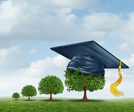 Graduation concept with a group of trees growing from a small sapling to a mature large tree  photo