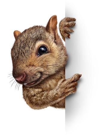 Ardilla con un cartel en blanco con piel realista y patas como un personaje bonito tierno amigable roedor sujetar una muestra de la cartelera de la publicidad y el marketing como un mensaje importante y especial en materia de animales silvestres y la fauna del bosque Foto de archivo