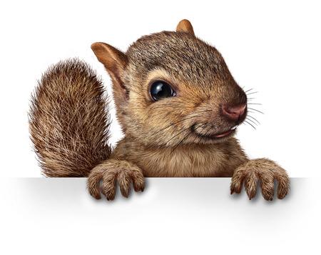 Leuke eekhoorn opknoping over een lege banner teken met kopie ruimte als een vriendelijke schattige harige knaagdieren karakter aangrijpend een billboard signage voor reclame en marketing als een boodschap van het dierlijke wild of achtertuin beestjes Stockfoto