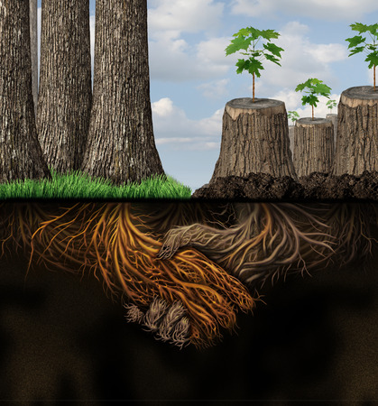 deep roots: Economic support and financial assistance business concept as a forest of healthy trees helping a group of chopped tree trunks as roots shaped with a handshake as a metaphor for new development  Stock Photo