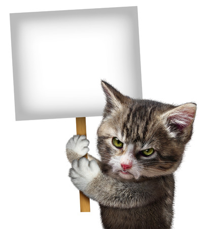 Angry cat holding a blank card sign as an annoyed and furious cute kitten feline with an enraged expression protesting and communicating a message pertaining to pet care on an isolated white background  photo