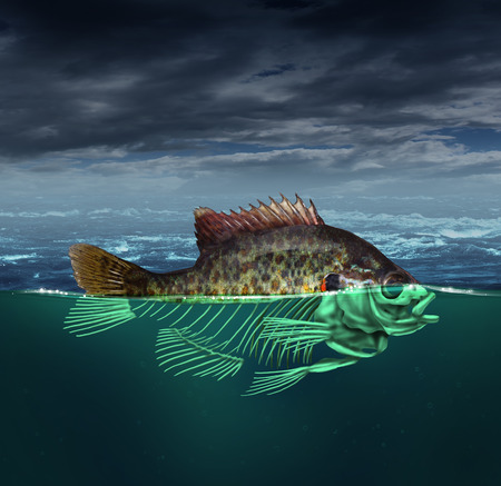 polluted river: Water pollution and polluted ocean concept as a fish with half of the body underwater as a skeleton  for environmental and conservation concerns