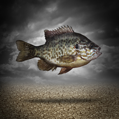 business metaphore: Fish out of water as a business or lifestyle metaphor for adapting to changes in the environment as an aquatic animal floating above dried cracked ground as a symbol of crisis management and overcoming challenges as climate change  Stock Photo