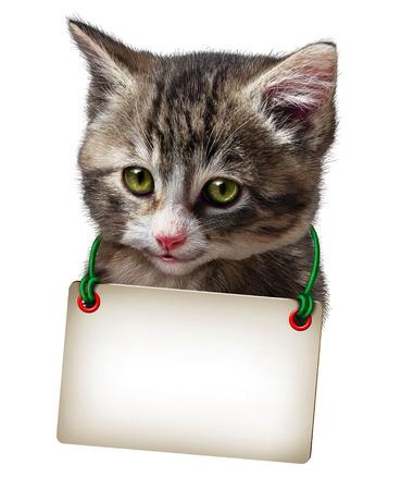 hanging around: Gato o gatito con una tarjeta en blanco que cuelga alrededor del cuello felino lindo aislado en un fondo blanco