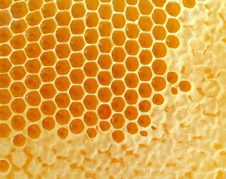 abejas panal: Honeycomb o peine de la miel de fondo creado por las abejas como símbolo de estilo de vida saludable de edulcorante natural orgánico fresco de la naturaleza containrd en celdas de cera hexágono.