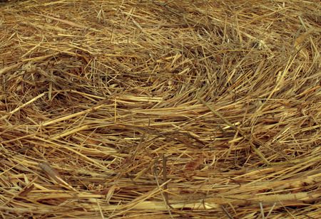 Hay Circular Texture background as an angled view of a circle bale of hay as an agriculture farm and farming symbol of harvest time with dried grass straw as a bundled tied haystack.