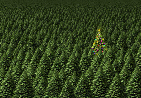 the chosen one: Magical christmas tree concept as a dense forest of pine  with one individual plant decorated with ornaments as a shinning star in a green field of holiday trees background as a winter celebration symbol.