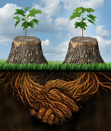Helping one another as a mutual benefit business support group concept as two chopped trees with new growth of hope emerging as teamwork with the roots shaped as a handshake providing the strength for success. Archivio Fotografico
