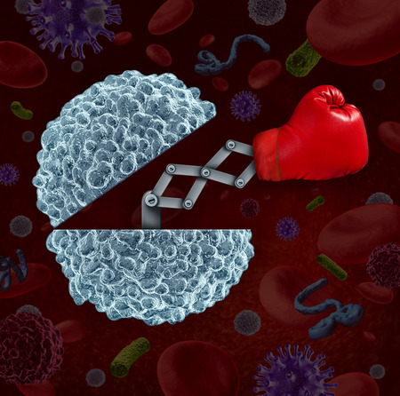 human immune system: Immune system concept as an open white blood cell with a boxing glove emerging as a health care metaphor for fighting disease and infection through the natural defense of the human body. Stock Photo