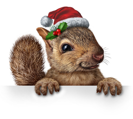 Holiday squirrel wearing a santa clause hat with  holly and red berries hanging over a blank banner