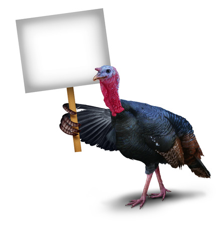 Turkey bird sign concept as a thanksgiving character symbol holding up with its wing a sign placard on a white background representing autumn celebration ans seasonal wildlife theme. photo