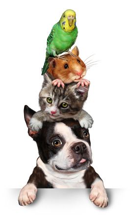 Group of pets concept as a dog cat hamster and budgie standing on top of eath other as a symol for veterinary care and support or pet store design element for advertising and marketing on a white background. Stock Photo