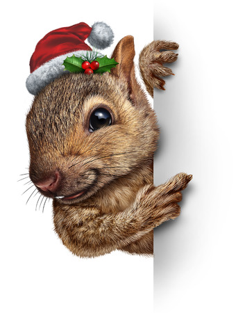 Holiday squirrel vertical sign wearing a santa clause hat with holly and red berries hanging over a blank side banner with copy space gripping a billboard as a Christmas new year or winter celebration message. photo