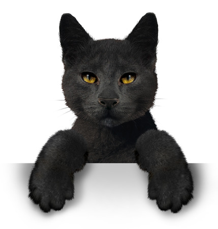omen: Black cat as a symbol for superstition and an animal with a horizontal blank sign representing halloween announcement made by a pet belonging to a witch.