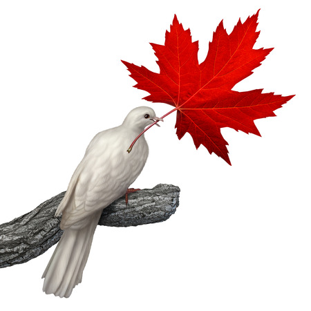 diritti umani: Canada concetto di pace come una colomba bianca in possesso di un rosso foglia d'acero su sfondo bianco come simbolo di nonviolenza canadese e la risoluzione dei conflitti o problemi della giustizia e dei diritti umani. Archivio Fotografico
