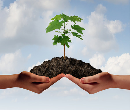 Cooperation growth business symbol as two hands holding up a heap of earth with a tree sapling growng. 写真素材