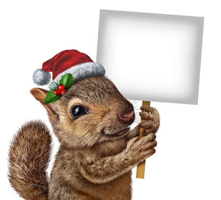 yard sign: Holiday squirrel  wearing a santa clause hat with holly and red berries holding a blank banner sign with copy space as a Christmas new year banner or winter celebration message.