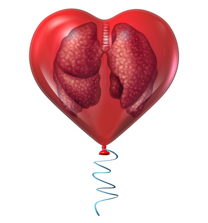 Lung health concept and medical symbol with a human anatomical organ inside a red balloon as an icon for respiratory cardiovascular risks and cardio care isolated on a white background.