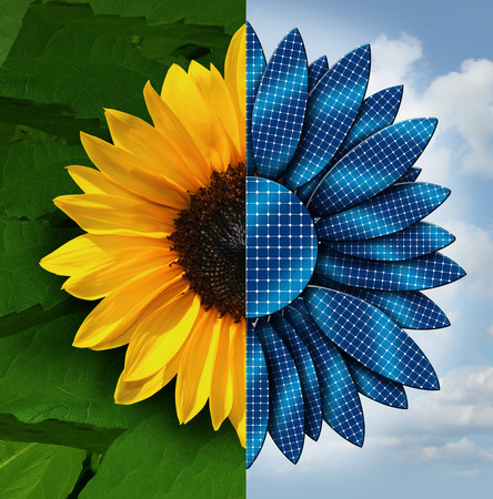 Sun energy concept as a sunflower divided in two with the opposite side as solar panel petals as a symbol and metaphor for ecology and technology working togethder.