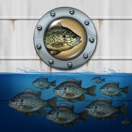 Different thinking business concept as a group of fish swimming in water with an individual noncomformist hitching a ride in a ship as a metaphor for out of the box strategy for success.