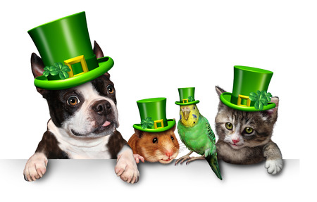 white dog: Green Pet sign with a fun cat happy dog cute hamster and budgie wearing a spring shamrock hats with clover hanging on a horizontal white placard with copy space.