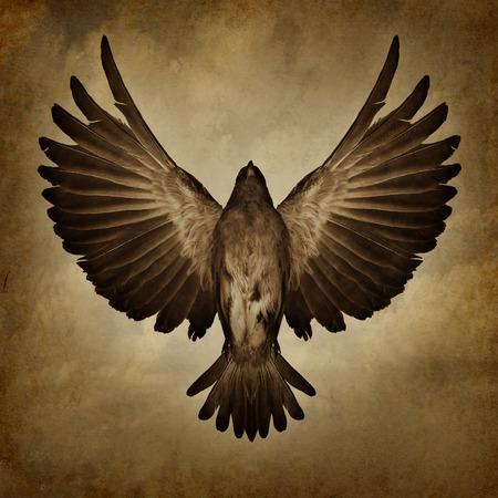 Asas da liberdade em um fundo da textura do grunge como um símbolo da fé e da espiritualidade livre quebra como um pássaro com penas abertas propagação que voam para cima, para o sucesso.